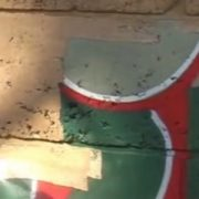 Oplachování graffiti ze zděného plotu ošetřeného Ochranným nátěrem