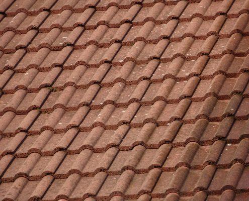 Plíseň na střeše